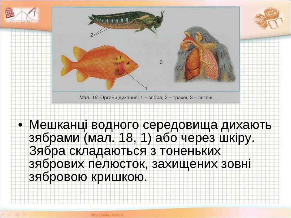 Мешканці водного середовища дихають зябрами (мал. 18, 1) або через шкіру. Зяб...