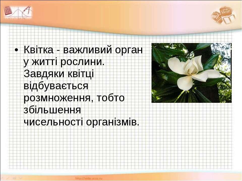 Квітка - важливий орган у житті рослини. Завдяки квітці відбувається розмноже...
