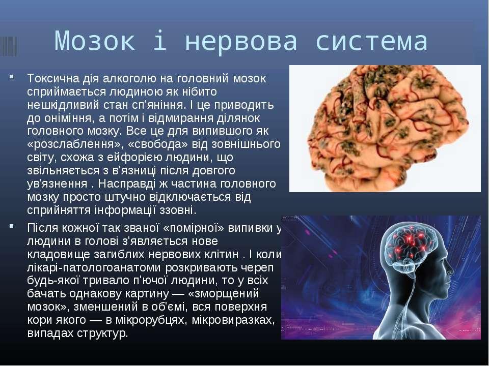 Мозок і нервова система Токсична дія алкоголю на головний мозок сприймається ...