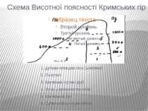 Схема Висотної поясності Кримських гір 1. Дубово-ялівцеві ліси (шибляки) 2. Л...