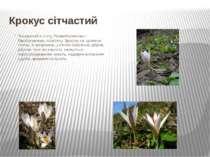 Крокус сітчастий Поширений встепу, Правобережному i Лівобережному лісостепу....