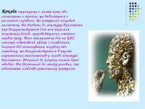 Кокаїн отримують з листя коки або синтезують з екгонін, що виділяється з росл...