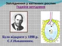 Запліднення у квіткових рослин Подвійне запліднення Було відкрите у 1898 р. С...