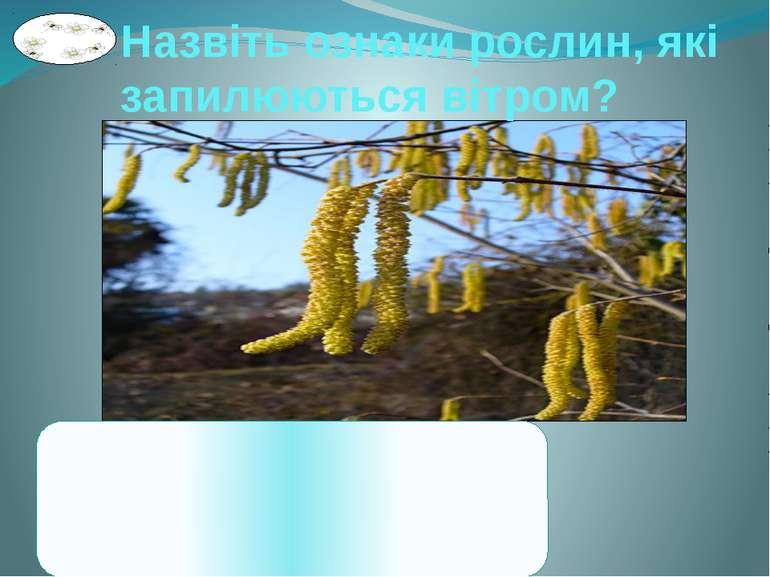 Назвіть ознаки рослин, які запилюються вітром? 1. Квітки безбарвні, малопоміт...