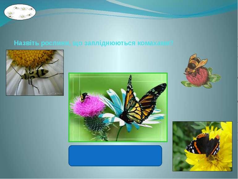Назвіть рослини, що запліднюються комахами? Лугові рослини.