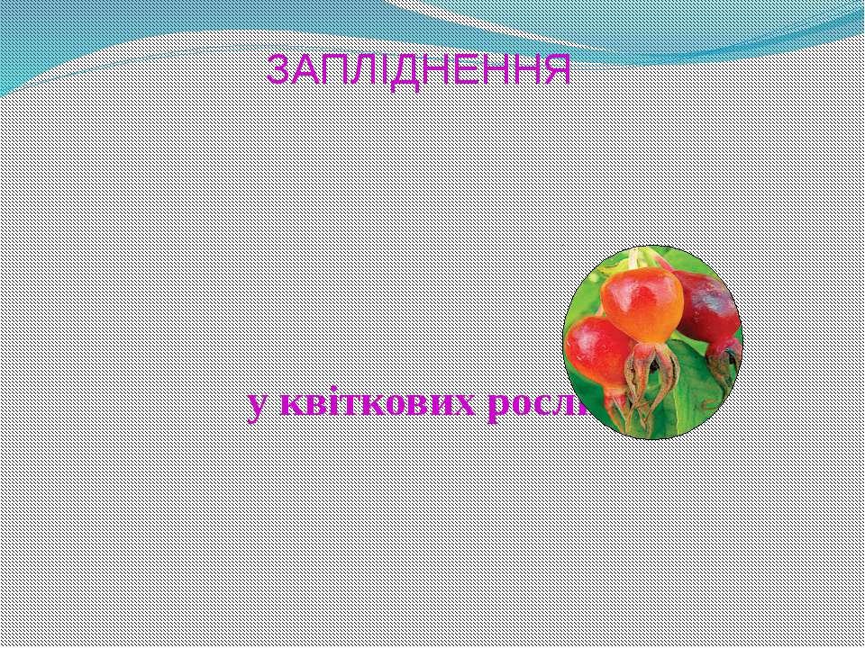 ЗАПЛІДНЕННЯ у квіткових рослин