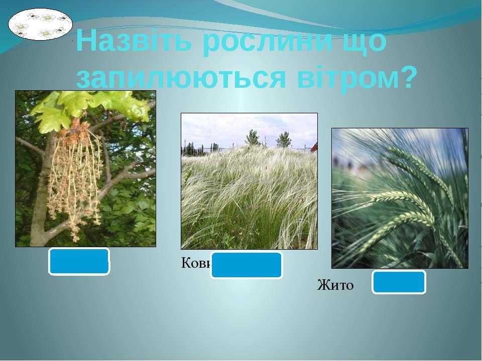 Назвіть рослини що запилюються вітром? Дуб Ковила Жито