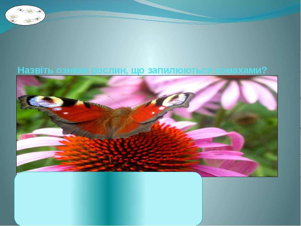 Назвіть ознаки рослин, що запилюються комахами? 1. Квіти великі, яскраві, різ...
