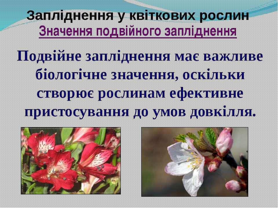 Запліднення у квіткових рослин Подвійне запліднення має важливе біологічне зн...