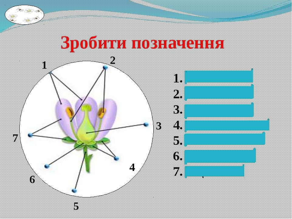 1. Пелюстки 2. Тичинки 3. Маточка 4. Чашолистики 5. Квітконіжка 6. Квітколоже...