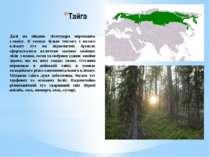 Тайга Далі на південь лісотундра переходить утайгу. В умовах більш теплого і...