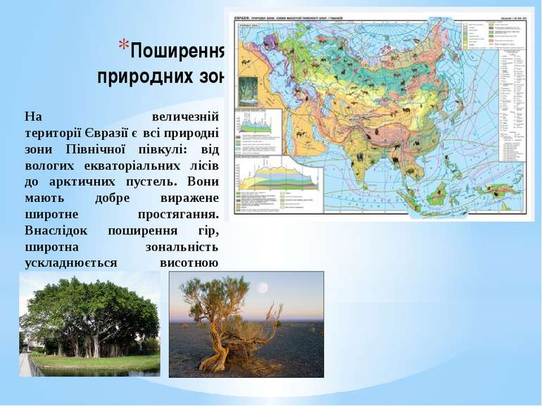 Поширення природних зон На величезній територіїЄвразіїє всіприродні зони П...