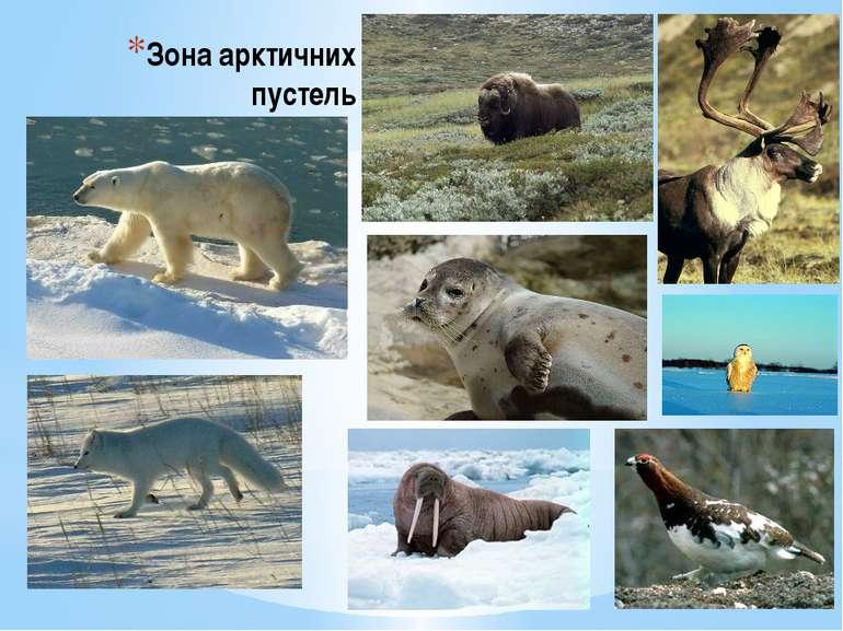 Зона арктичних пустель