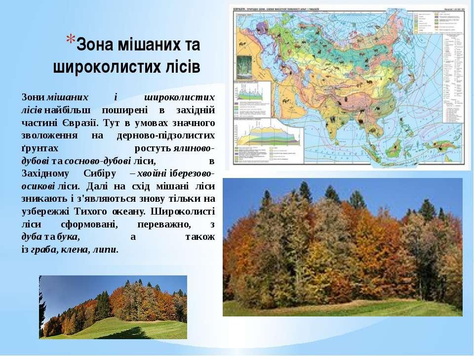 Зона мішаних та широколистих лісів Зонимішаних і широколистих лісівнайбільш...