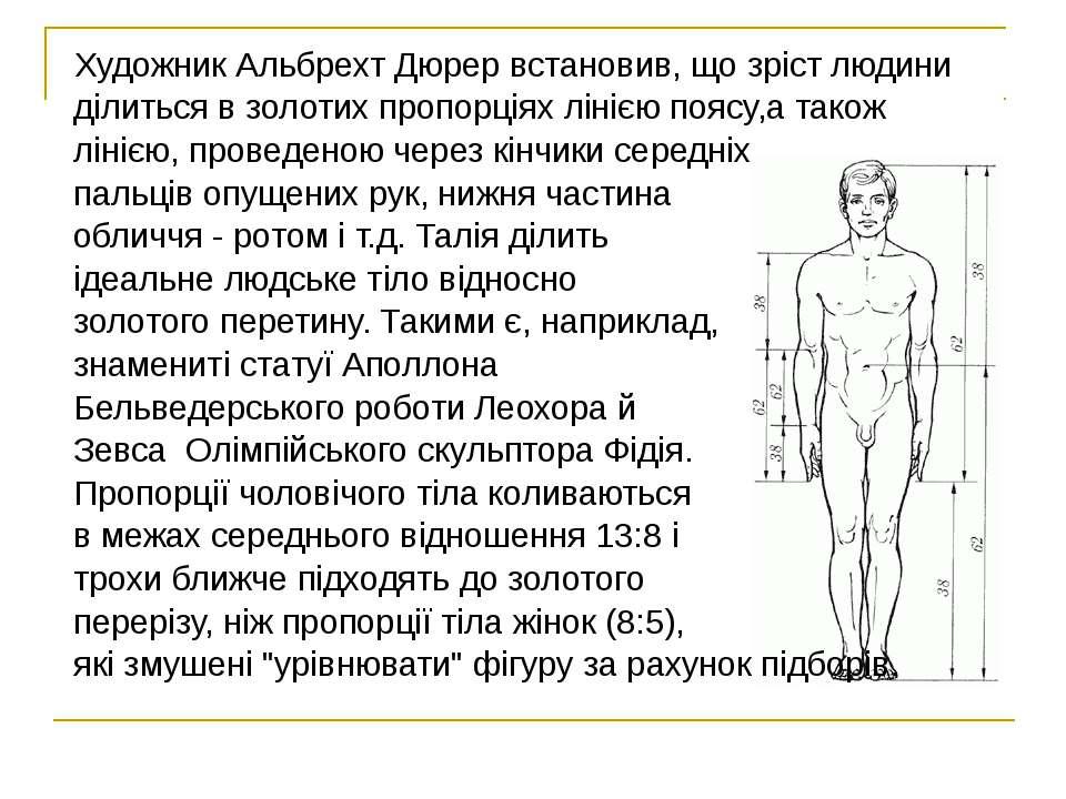 Художник Альбрехт Дюрер встановив, що зріст людини ділиться в золотих пропорц...