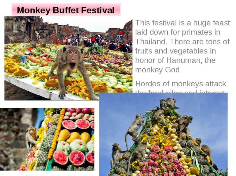 Monkey Buffet Festival This festival is a huge feast laid down for primates i...