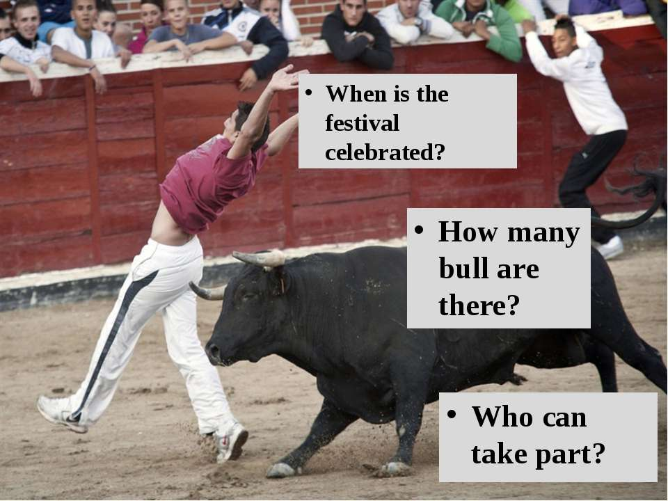 Who can take part? How many bull are there? When is the festival celebrated?