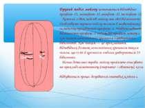 Другий поділ мейозупозначається відповідно: профаза–ІІ, метафаза–ІІ, анафаза...