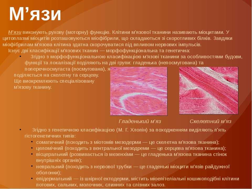 М'язи виконують рухову (моторну) функцію. Клітини м'язової тканини називають ...