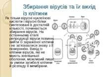 Збирання вірусів та їх вихід із клітини Як тільки вірусні нуклеїнові кислоти ...