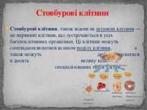 Стовбурові клітини, також відомі як штамові клітини— це первинні клітини, що...