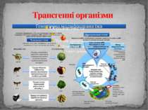 Трансгенні організми