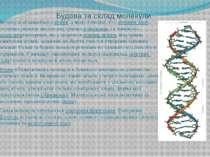 Будова та склад молекули Молекула складається затомів, а якщо точніше, то з...