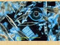 Діатомові водорості (темнопольна мікроскопія)