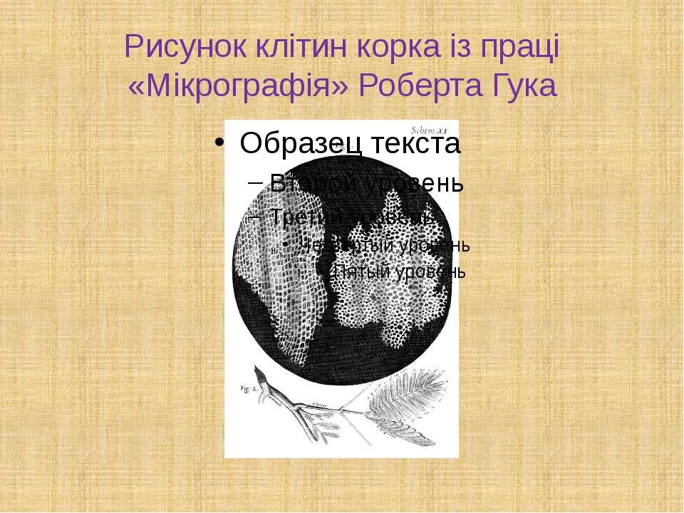 Рисунок клітин корка із праці «Мікрографія» Роберта Гука