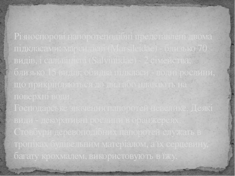 Різноспорові папоротеподібні представлені двома підкласами: марсилієві (Marsi...