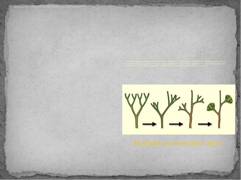 Як і у всіх вищих рослин, для папоротеподібних характерне чергування двох пок...