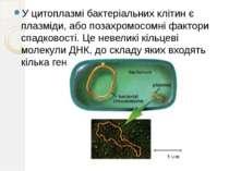 У цитоплазмі бактеріальних клітин є плазміди, або позахромосомні фактори спад...
