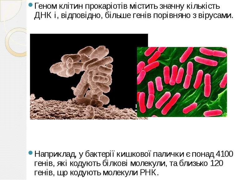 Геном клітин прокаріотів містить значну кількість ДНК і, відповідно, більше г...