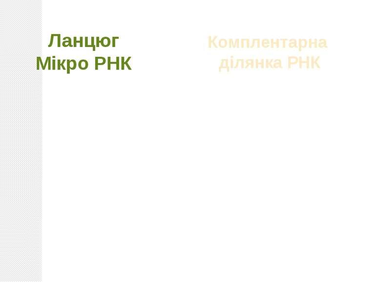 Ланцюг Мікро РНК + Комплентарна ділянка РНК = РІЗНІ НАСЛІДКИ