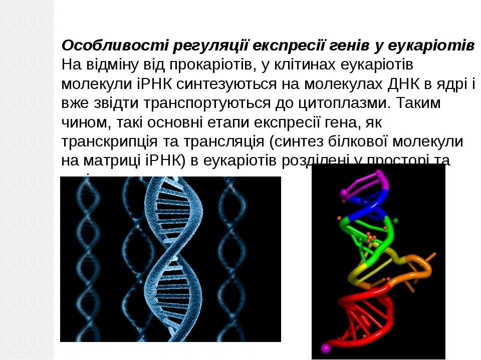 Особливості регуляції експресії генів у еукаріотів На відміну від прокаріотів...