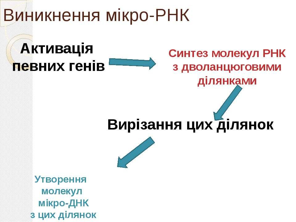 Виникнення мікро-РНК Активація певних генів Синтез молекул РНК з дволанцюгови...