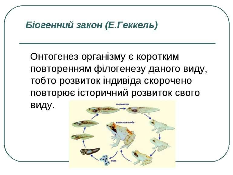 Біогенний закон (Е.Геккель) Онтогенез організму є коротким повторенням філоге...