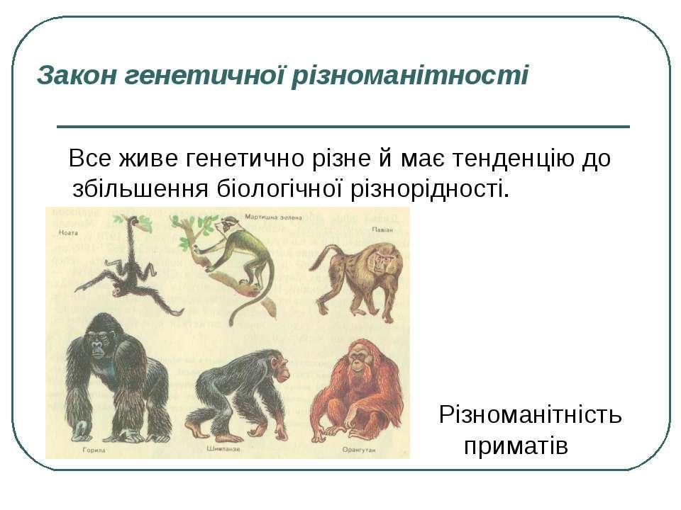 Закон генетичної різноманітності Все живе генетично різне й має тенденцію до ...