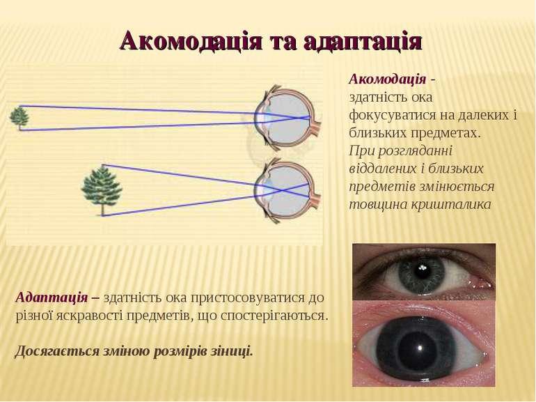Акомодація та адаптація Адаптація – здатність ока пристосовуватися до різної ...