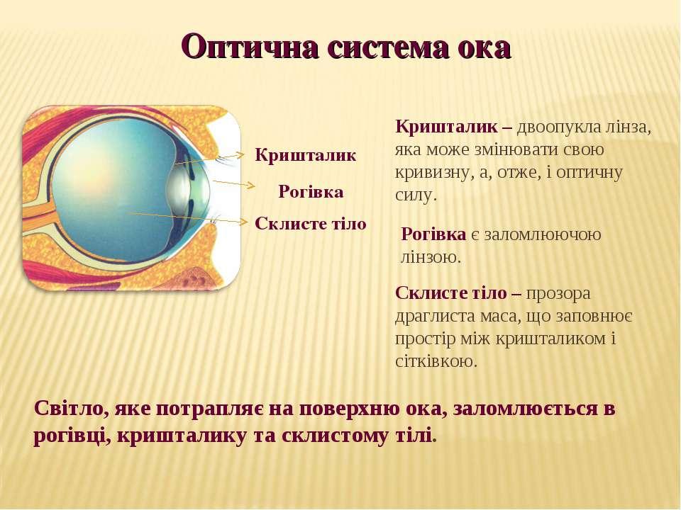 Кришталик Склисте тіло Кришталик – двоопукла лінза, яка може змінювати свою к...