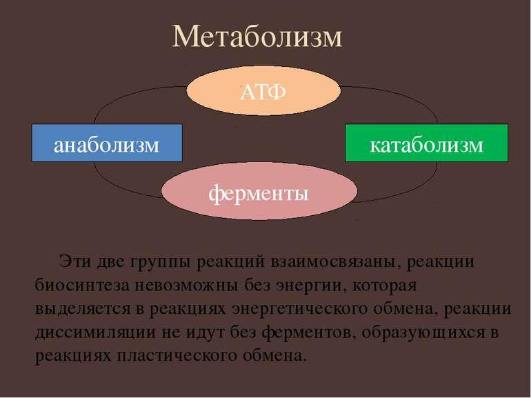 Метаболизм Эти две группы реакций взаимосвязаны, реакции биосинтеза невозможн...