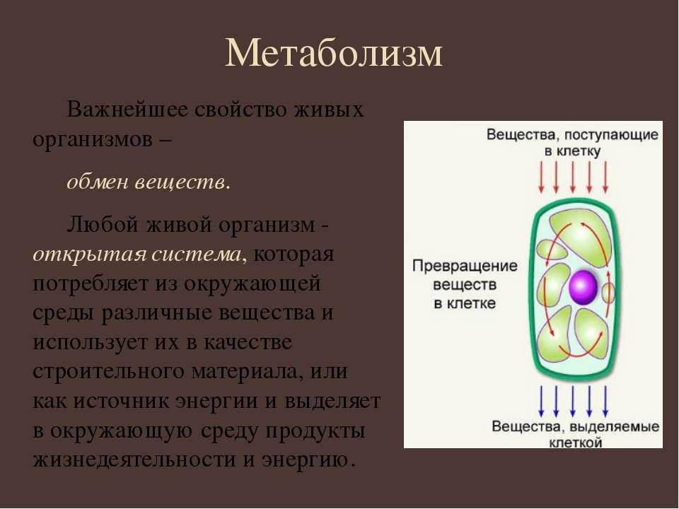 Метаболизм Важнейшее свойство живых организмов – обмен веществ. Любой живой о...
