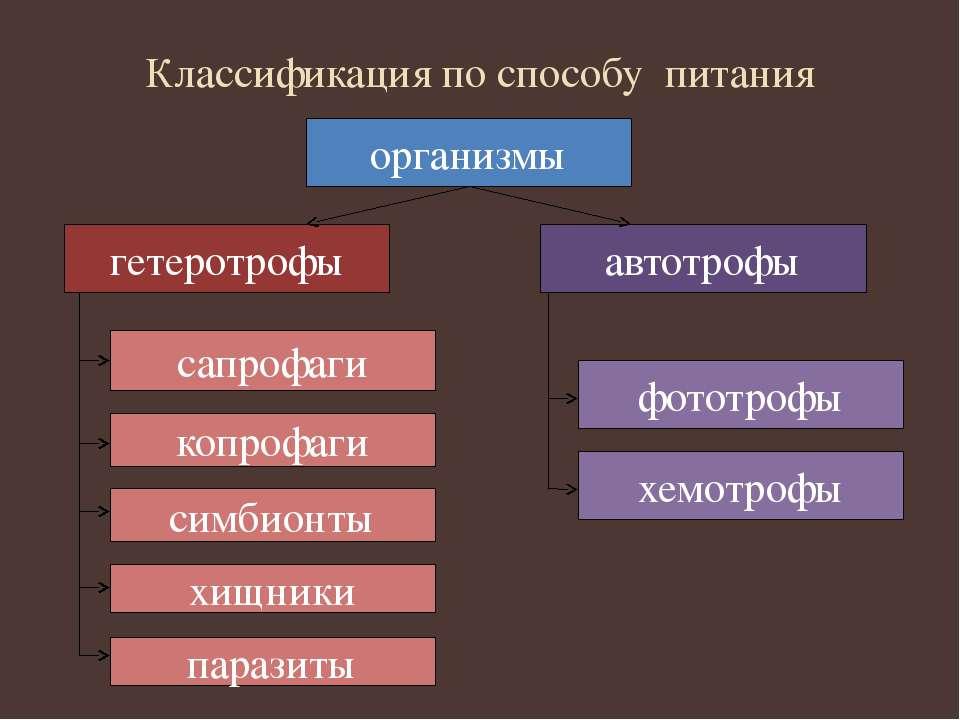 Классификация по способу питания организмы автотрофы гетеротрофы симбионты ко...