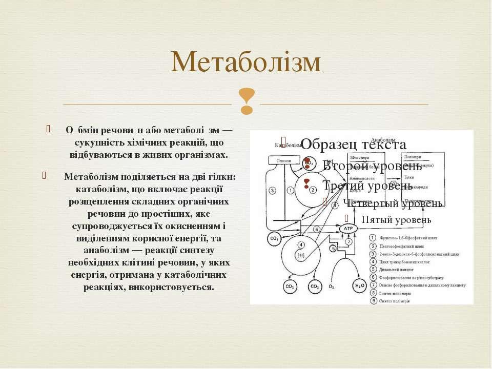 Метаболiзм О бмін речови н або метаболі зм— сукупність хімічних реакцій, що ...