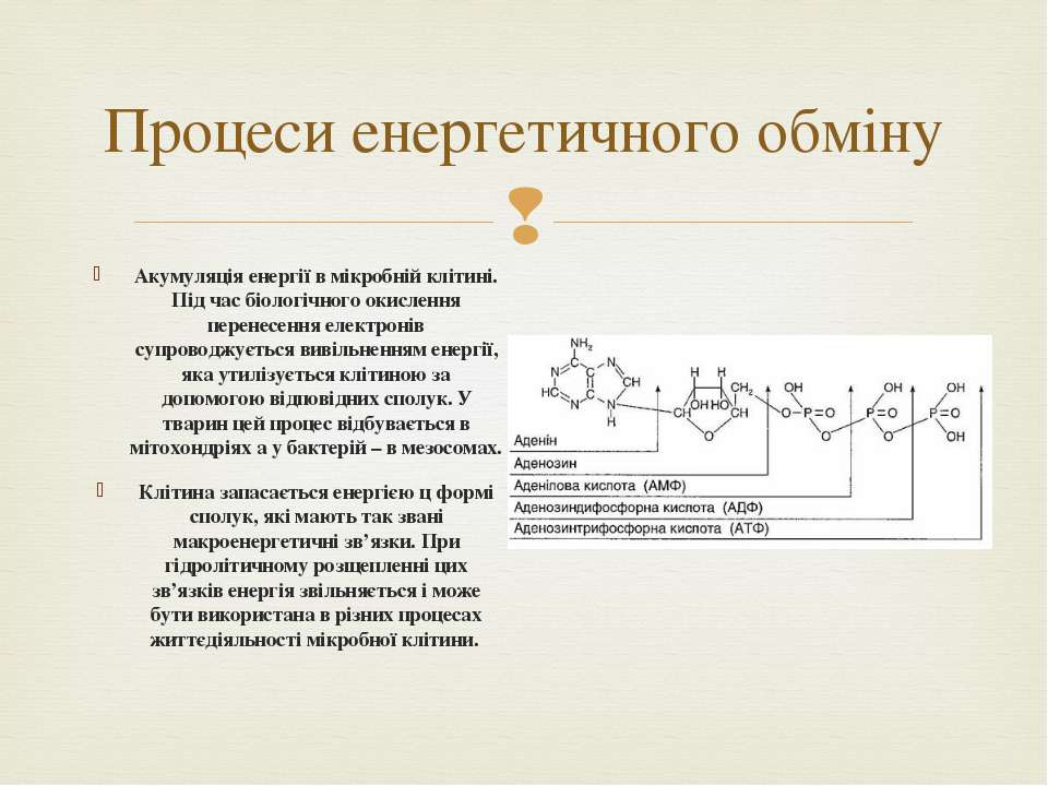 Процеси енергетичного обміну Акумуляція енергії в мікробній клітині. Під час ...