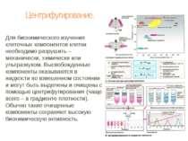Центрифугирование. Для биохимического изучения клеточных компонентов клетки н...