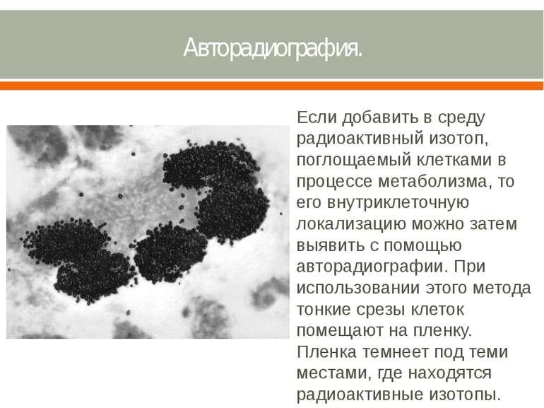 Авторадиография. Если добавить в среду радиоактивный изотоп, поглощаемый клет...