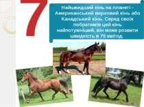 7 Найшвидший кінь на планеті - Американський верховий кінь або Канадський кін...
