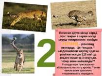 2 Почесне друге місце серед усіх тварин і перше місце серед чотириногих посід...