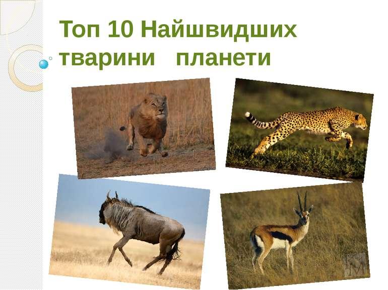 Топ 10 Найшвидших тварини планети